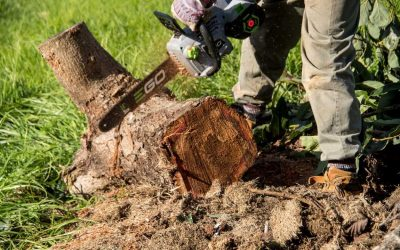 Manage Trees Better By Choosing Licensed Tree Service Experts