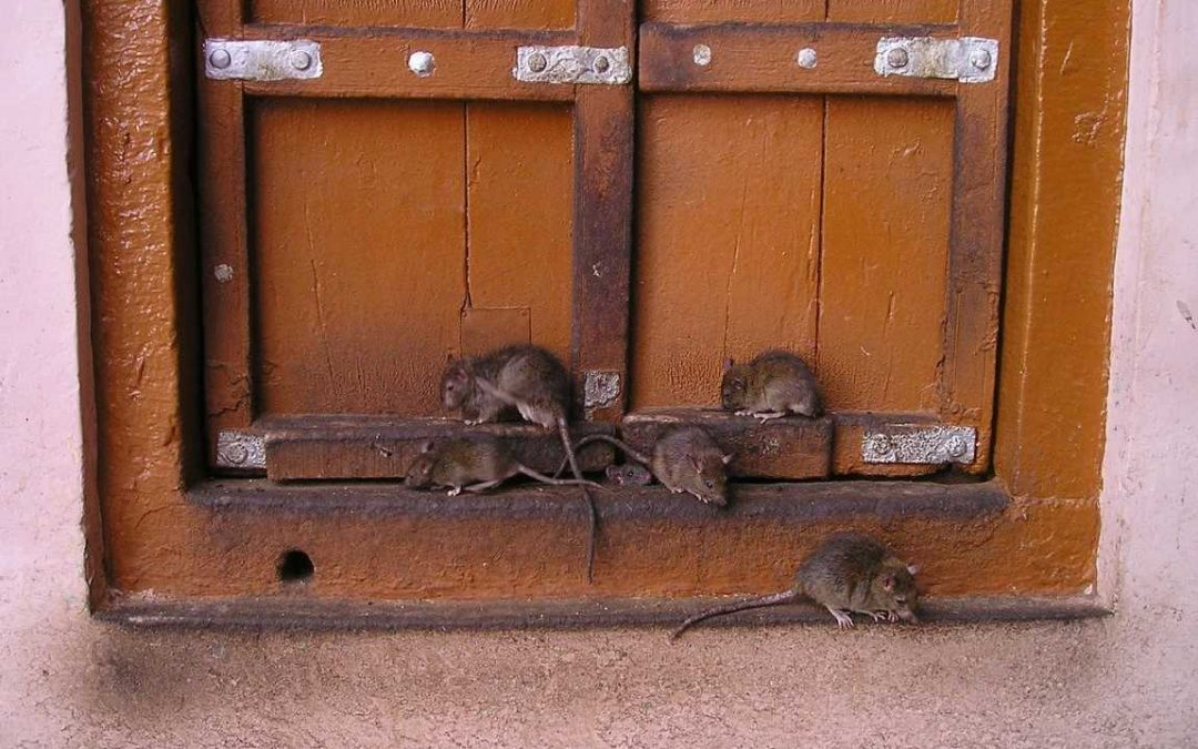 Get Rid Of Pests In Your Home With These Excellent Ideas