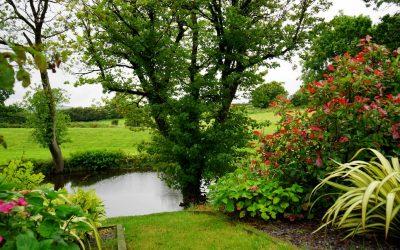 Tree Maintenance In Springtime – Mulching
