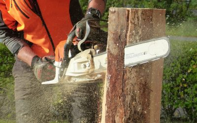 Taking Care of Your Trees with the Skilled Services of Tree Experts – A Must-Read Overview
