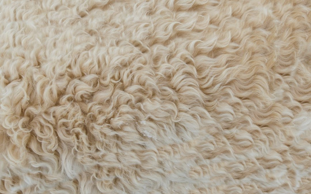 Clean Your Carpets a Lot More Effectively with These Top Tips